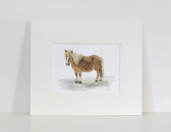 shetland pony watercolour painting