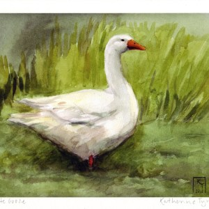 white goose, goose illustration, size A4