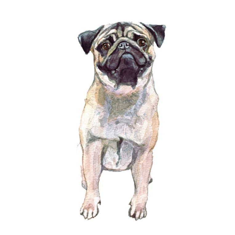 gift ideas for dog owners, pug watercolour painting