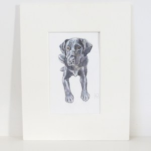 black labrador watercolour painting