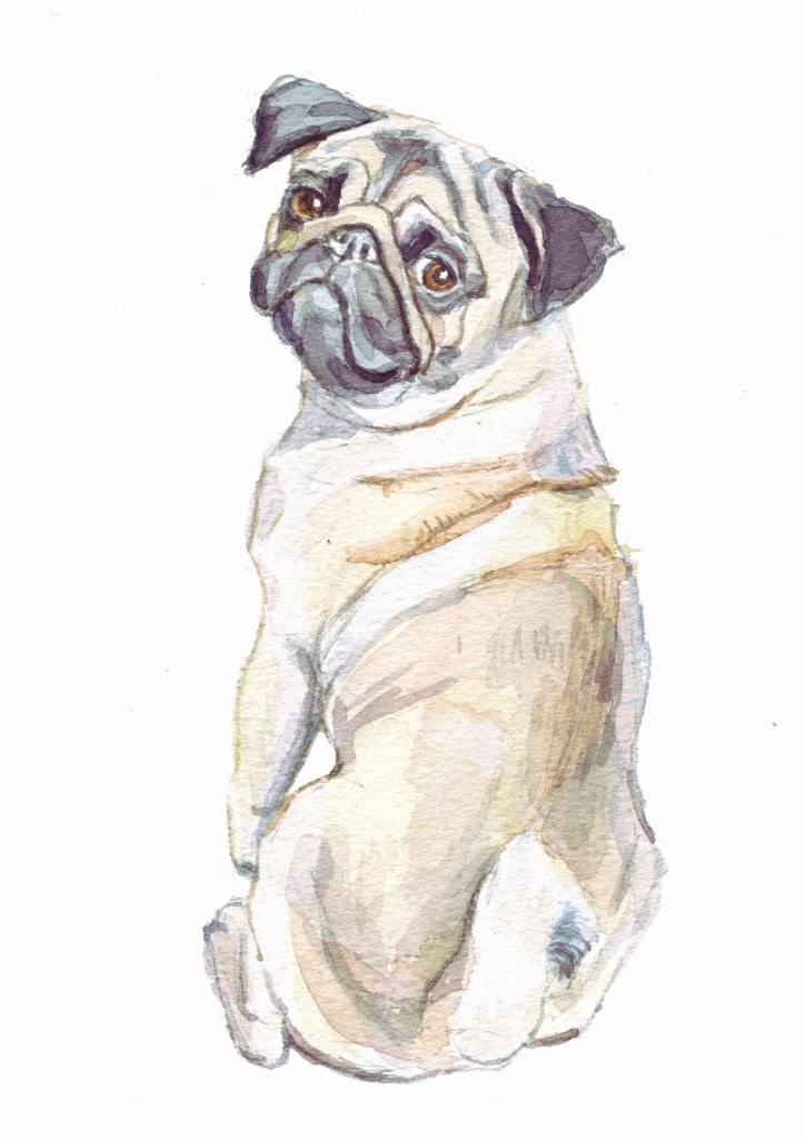 pug watercolour painting