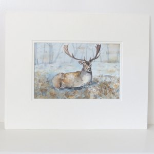 fallow deer watercolour