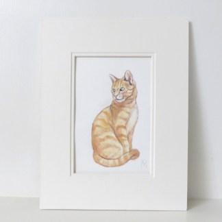marmalade cat watercolour ill