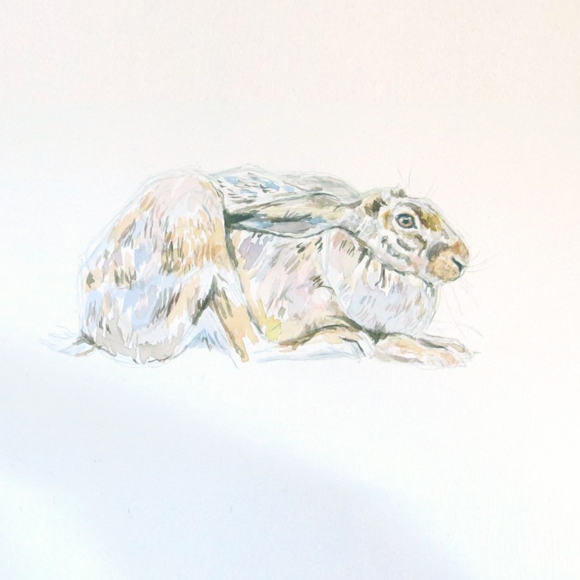 painting a hare in watercolours