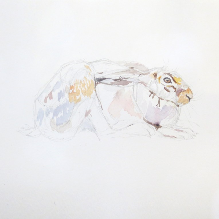 painting a hare
