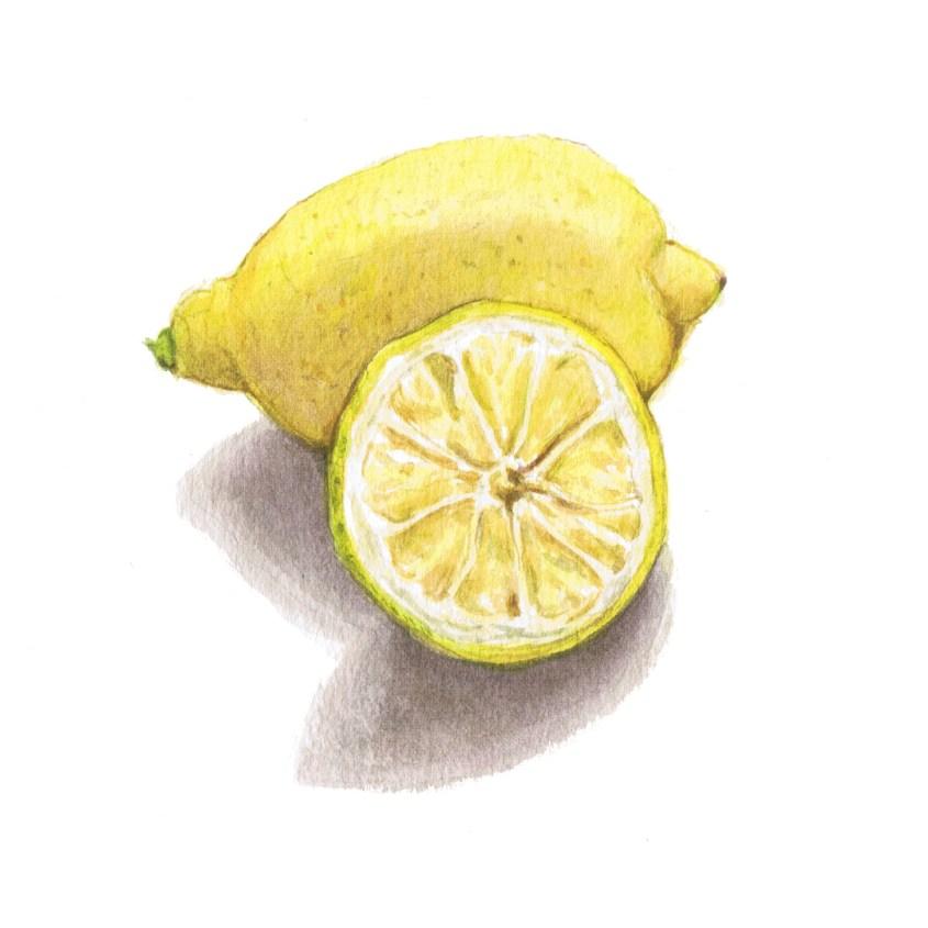 lemon watercolour illustration