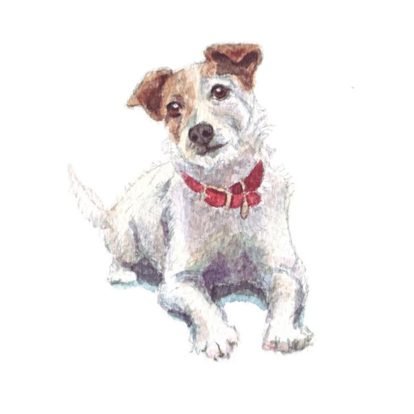 jack russell watercolour illustration