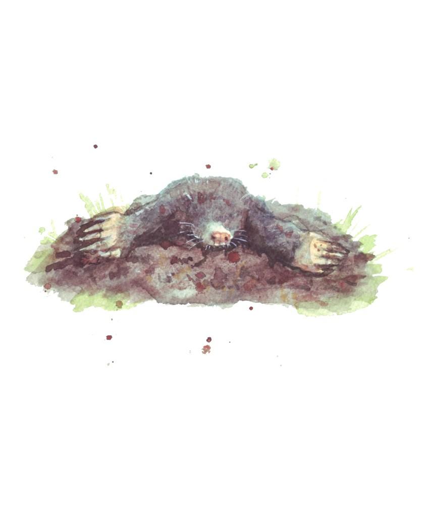 mole illustration