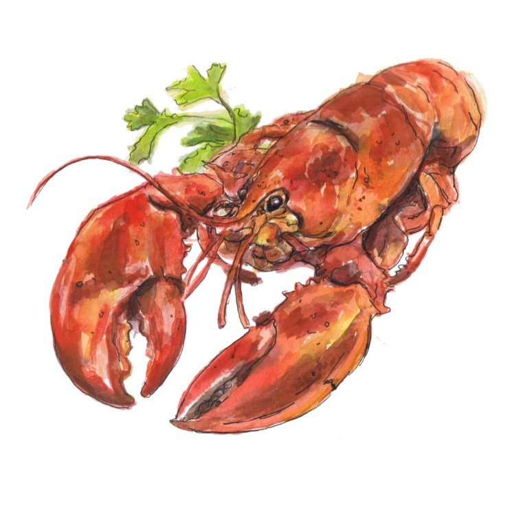 lobster watercolour illustration