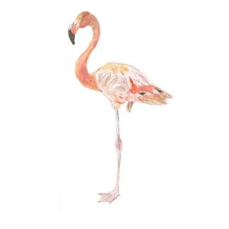 Flamingo Watercolour Illustration