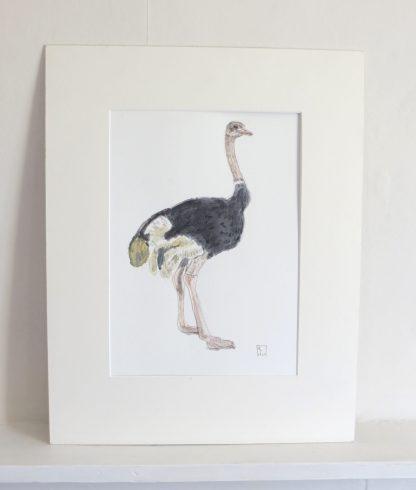 Original Watercolour Illustration of an Ostrich