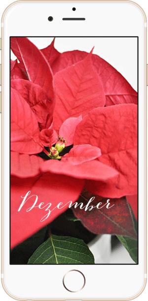 Wallpaper Dezember 2015 Freebie