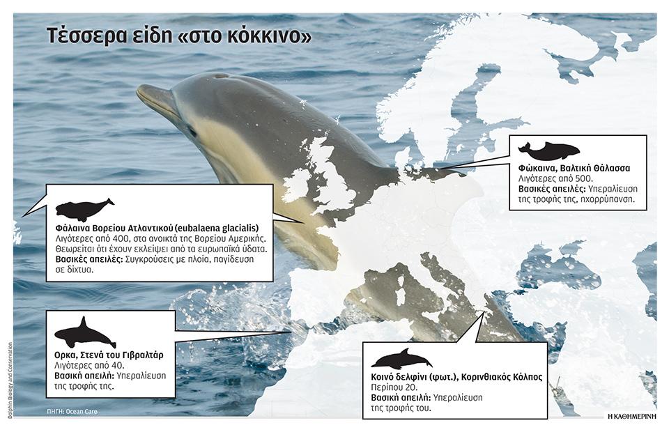 se-kindyno-delfinia-kai-falaines0