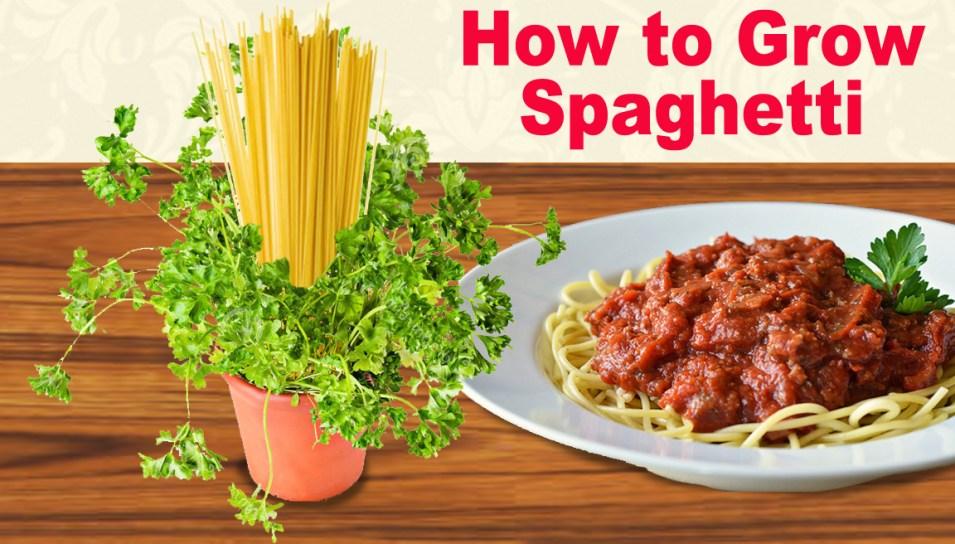 grow-spaghetti