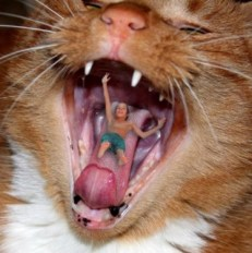 boy-in-cats-mouth-jpeg