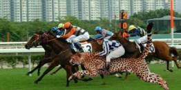 cheetah-racing-jpeg