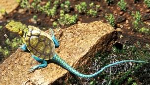 lizard-turtle-copy