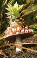 pineapple-mushroom-copy