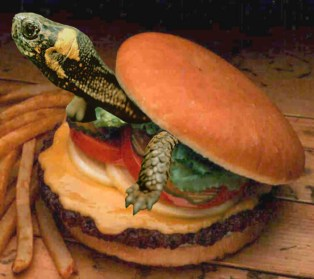 turtle-burger-2-copy