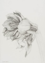 Graphit auf Papier • 21 x 29,7 cm