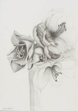 Bleistift auf Papier • 21 x 29,7 cm • 2013