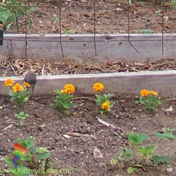 clean garden for being fruitful