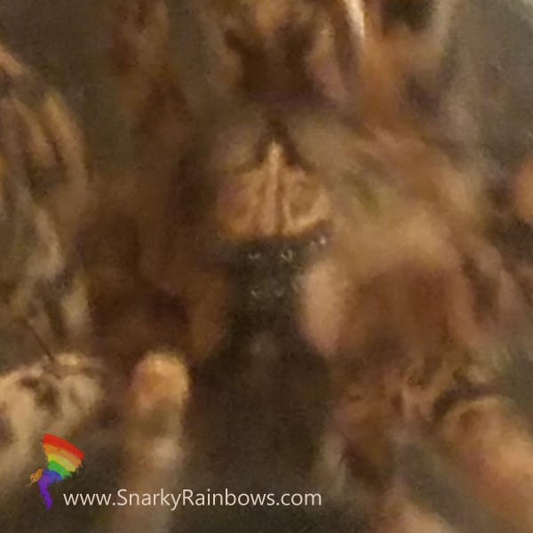 Up close with Jerry the pants stealing spider