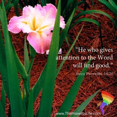 Scripture Focus Proverbs 16:20