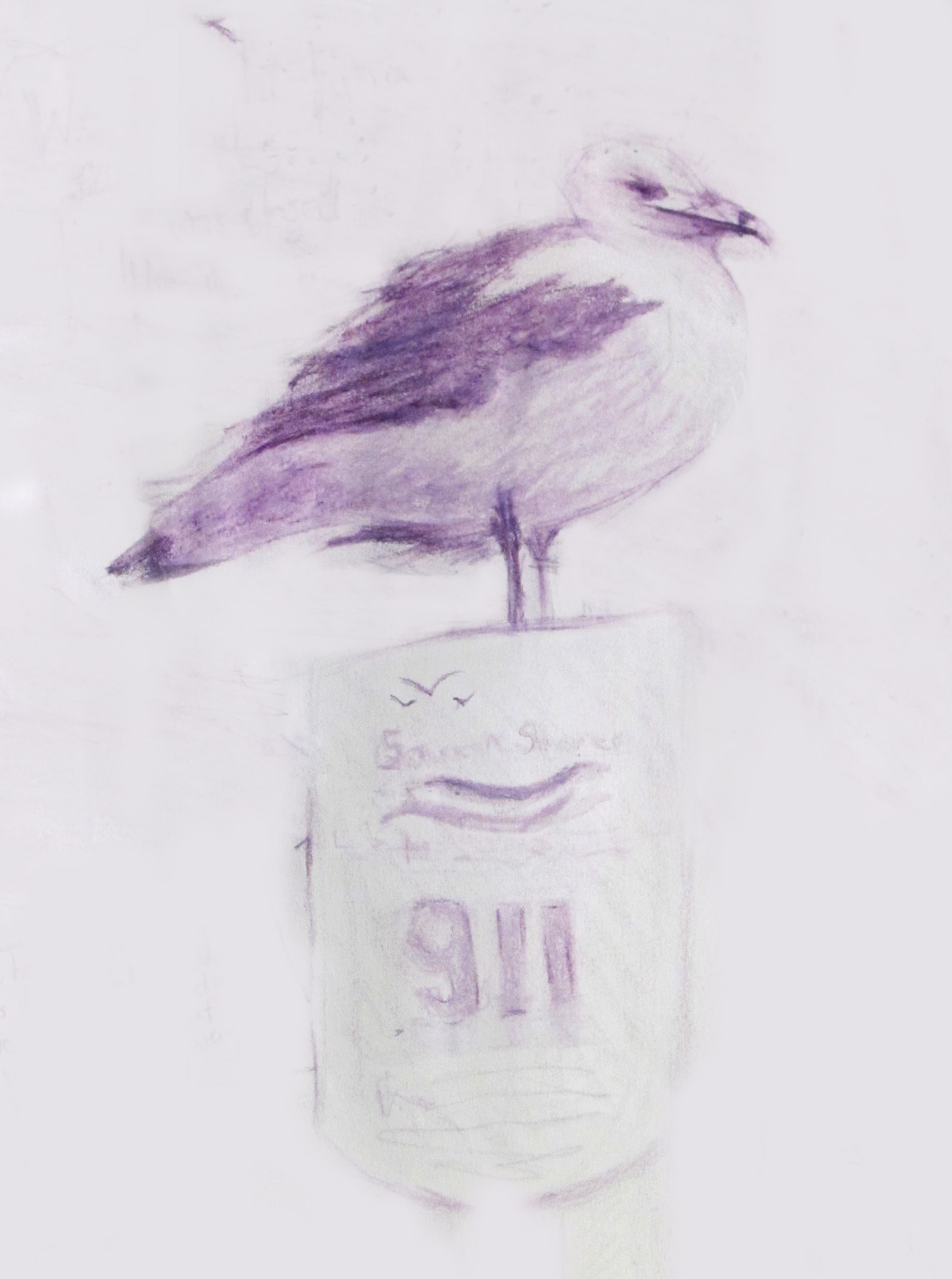 watch gull