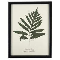 Industrial Fern Print Botanical Floral Framed Wall Art ...