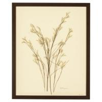 French Country Wildgrass Print Botanical Floral Framed ...