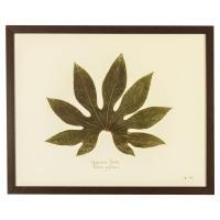 Industrial Japanese Aralia Print Botanical Framed Wall Art ...