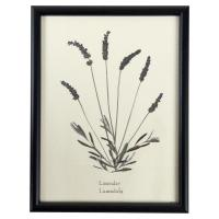 Industrial Lavender Print Botanical Floral Framed Wall Art ...