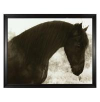 Hyden Rustic Lodge Modern Peaceful Horse Photo Wall Art ...