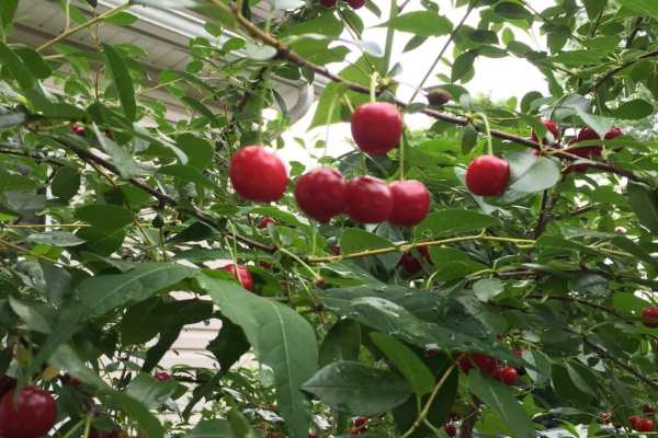 Cherry Pie Filling Recipe by Katie Crafts; https://www.katiecrafts.com