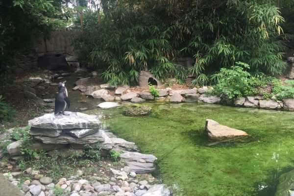 Philadelphia Zoo! on Katie Crafts; https://www.katiecrafts.com