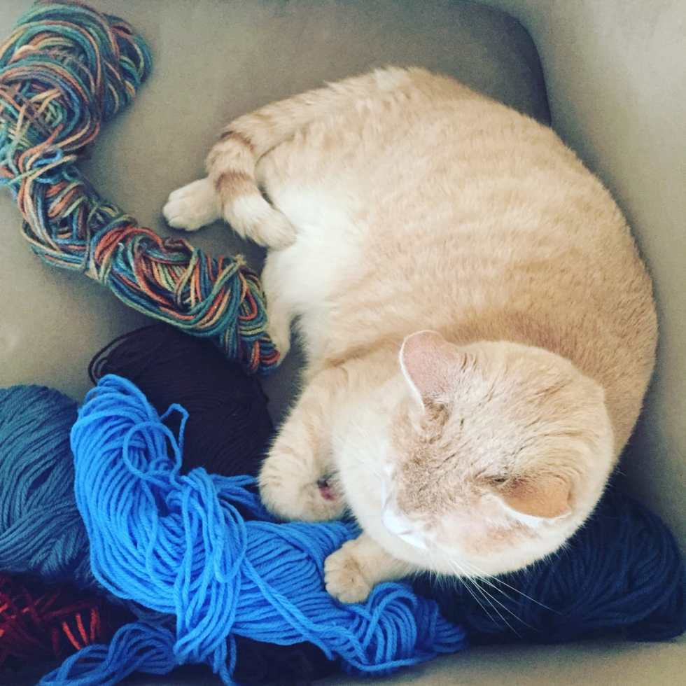 Lucky Loves Yarn on Katie Crafts; http://www.katiecrafts.com