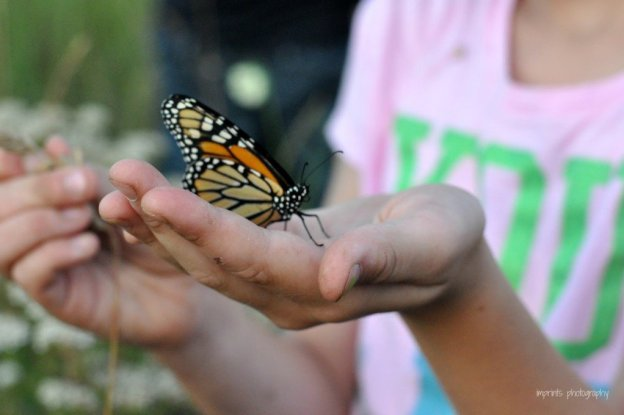 Girl holding a monarch butterfly in her hand by Katie M. Reid Photography