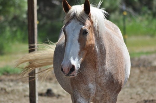 horse at Hopewell Ranch by Katie M Reid Photography