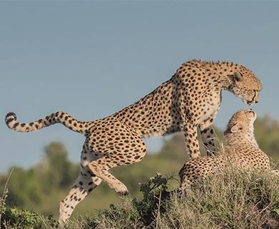 Tanzania Couple Safari