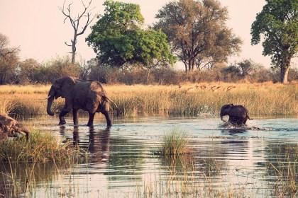 African Safari for World Celebrity