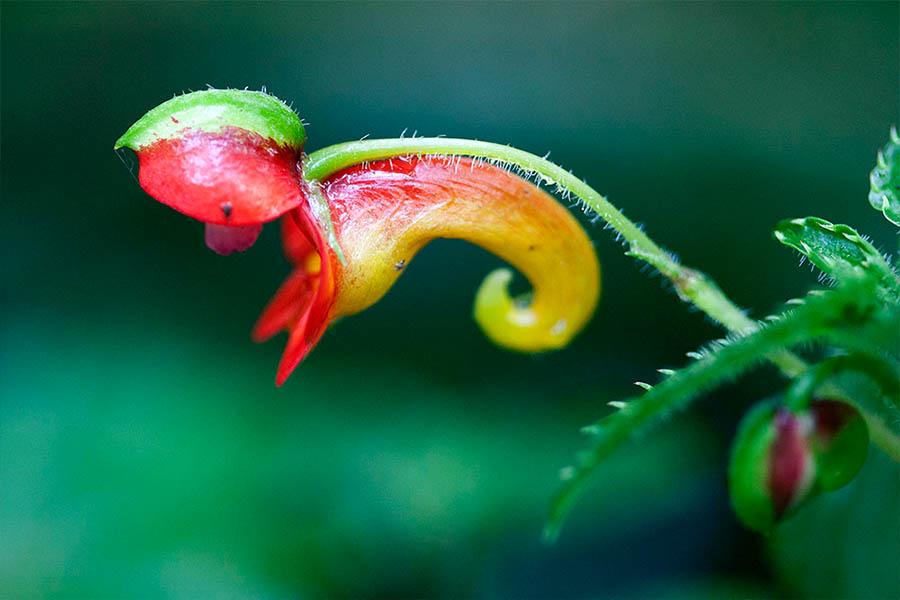 Flowers in Kilimanjaro Forest