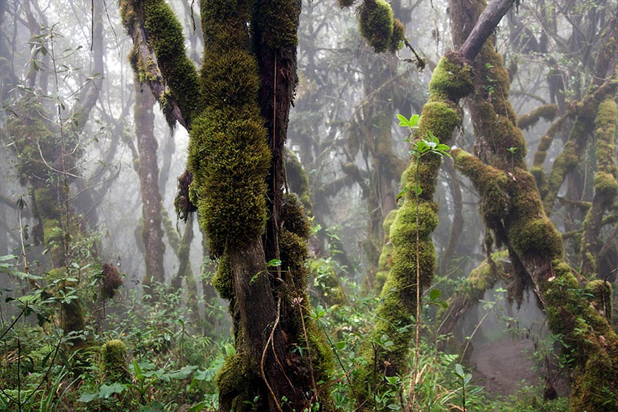 Kilimanjaro Forest