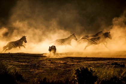 The Great Wildebeest Migration in the Picture