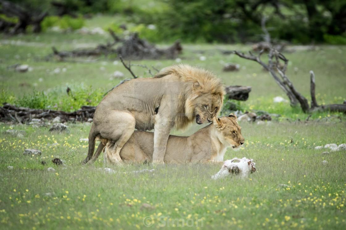 Safari holiday for couple