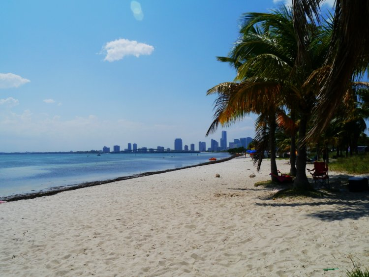 Image of an empty beach with palm trees and the Miami city skyline in the background