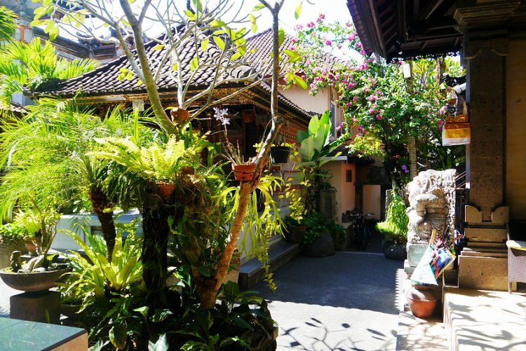 Image of courtyard surrounded by plants in guesthouse in Bali