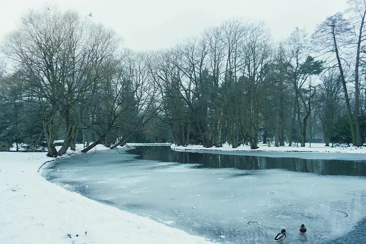 Image of frozen over river in park surrounded by bare trees