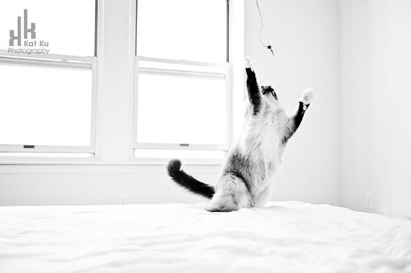 Achilles-Dancing-Cat-1