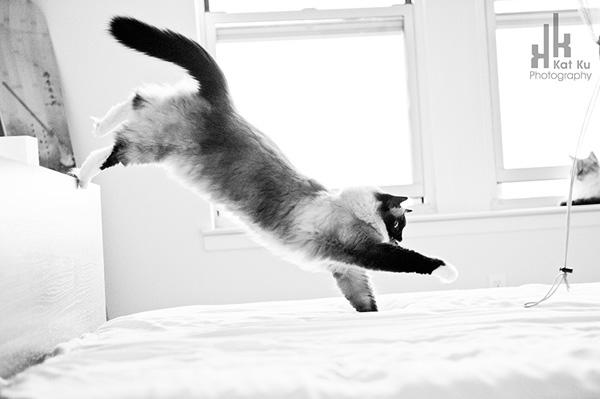 Achilles-Dancing-Cat-8